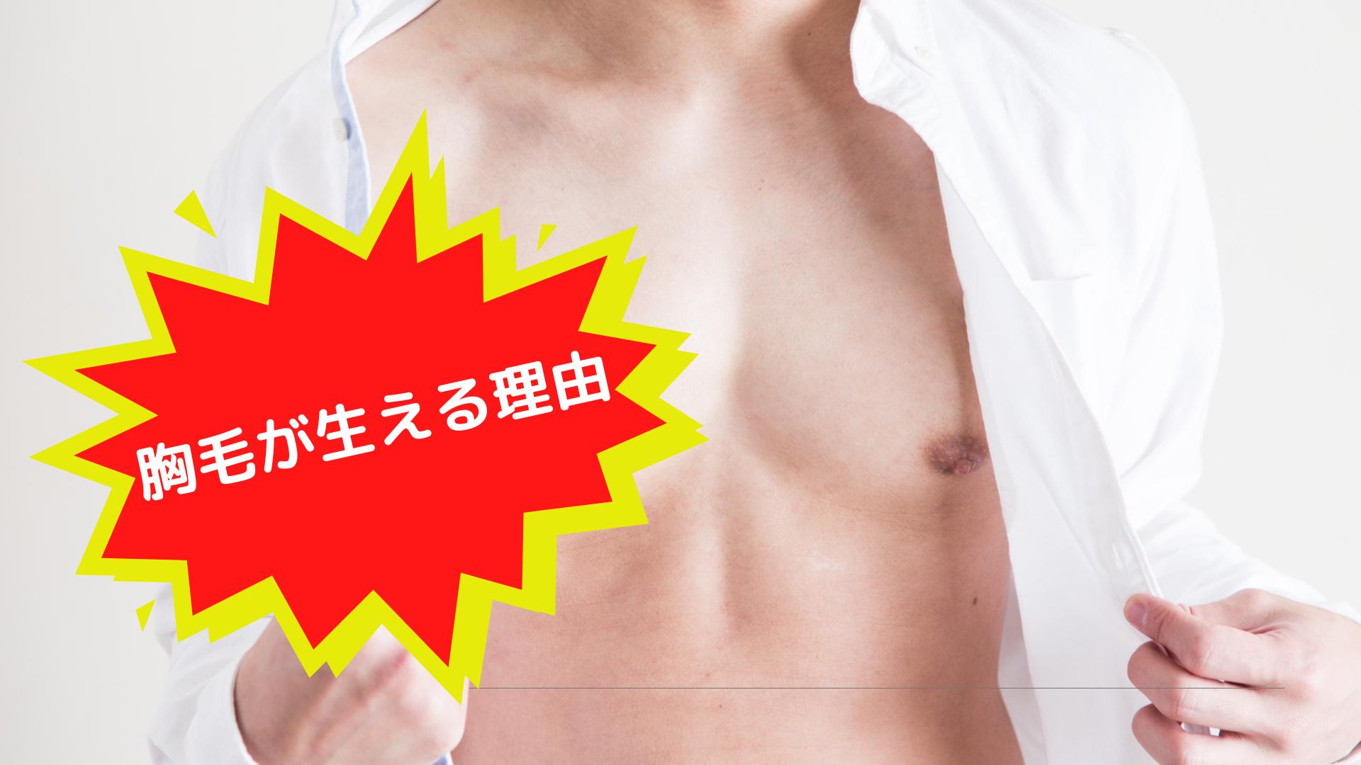 胸毛が生える理由